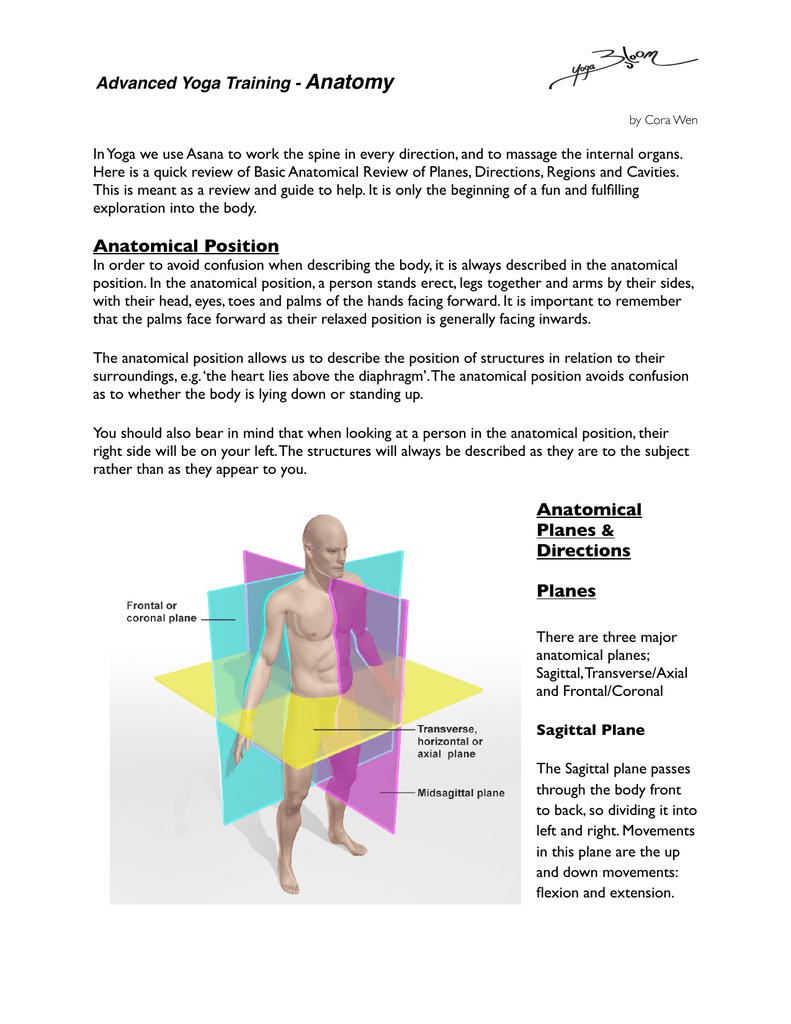 Anatomical Review Anatomical Planes