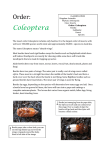 Order: Coleoptera - Australian Insect Farm