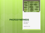 What is the role of pigments in photosynthesis?