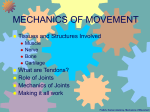 Mechanics of Movement I: Joints