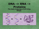DNA -> RNA -> Proteins