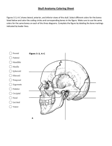 Skull Anatomy Coloring Sheet