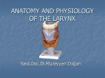 anatomy and physiology of the larynx