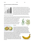 Agricultural Examples of Artificial Selection Corn Bananas