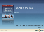 structure and function of the ankle and foot