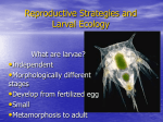 3 Larval ecology jh 2009