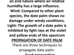 DATE PALM (Phoenix dactylifera, L.) ORIGIN The