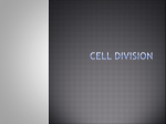 Cell Division - Wantagh School