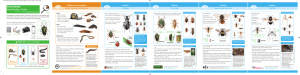 Invertebrate Identification Guide