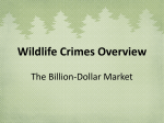 Env Sci Wildlife Crimes Overview