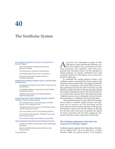 The Vestibular System