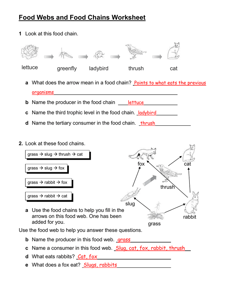 Food chains and webs worksheet answers biointeractive