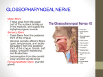 GLOSSOPHARYNGEAL NERVE