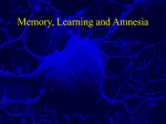 Learning, Memory and Amnesia