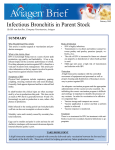 Infectious Bronchitis in Parent Stock