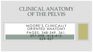 Clinical Anatomy of the Pelvis