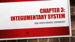 Chapter 3: Integumentary System