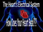 The Electrical Impulses of the Heart*