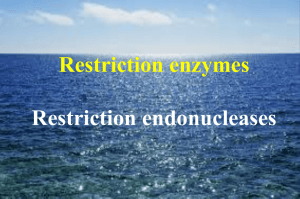 Restriction enzymes Restriction endonucleases