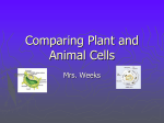 Comparing Plant and Animal Cells