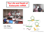 Life and Death of Eukaryotic MRNA (PowerPoint) Madison 2005