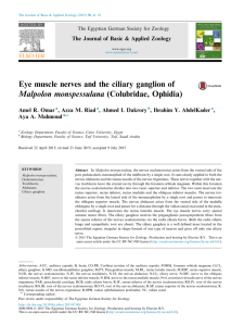 Eye muscle nerves and the ciliary ganglion of Malpolon