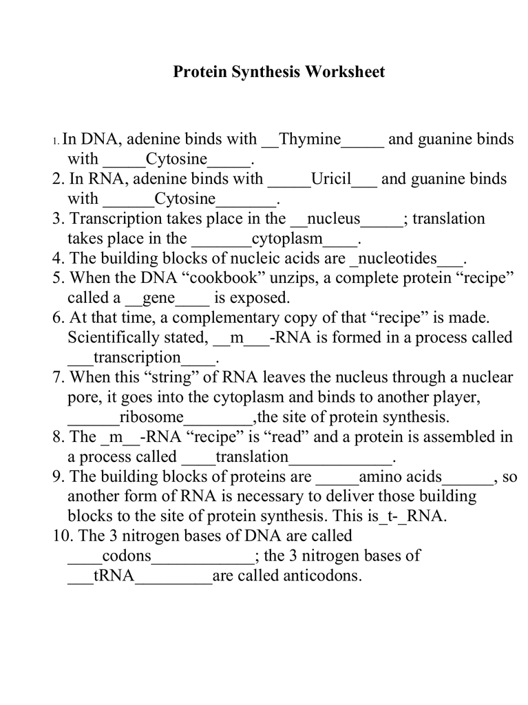 Hotmen: Answer Protein Synthesis Worksheet Key