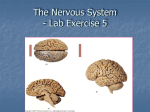 The Nervous System Chapter 8