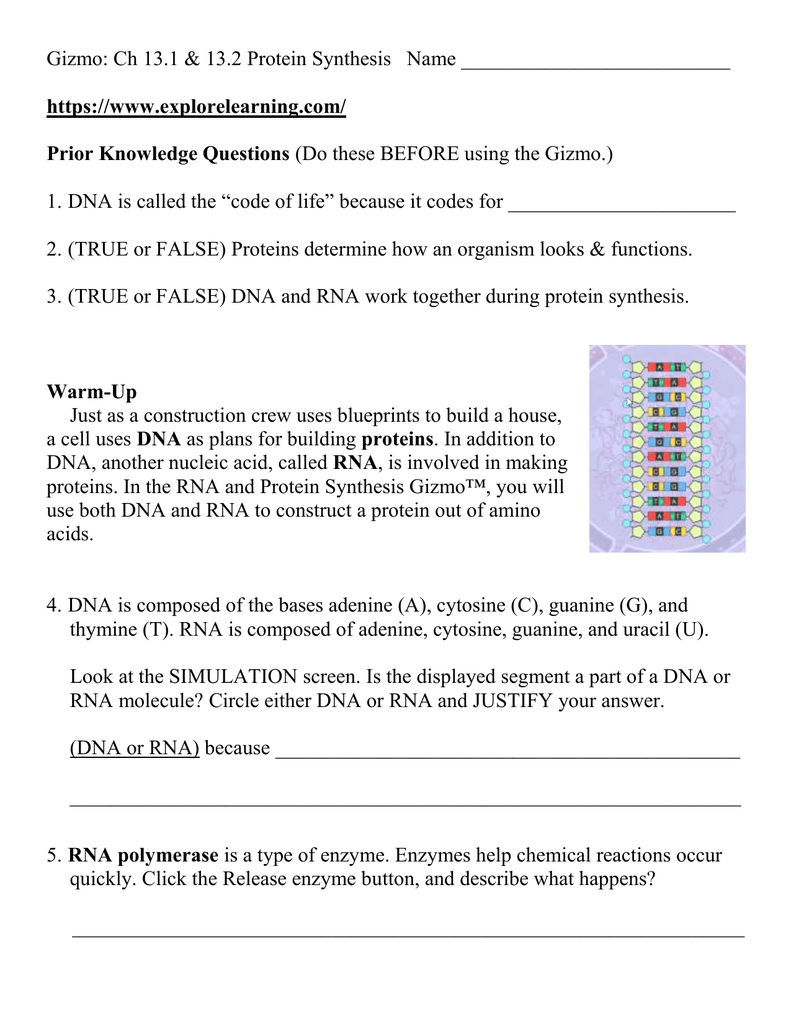 Student Exploration Building Dna Gizmo Answer Key ...