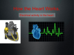 day 7 how the heart works