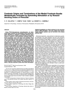 Forebrain Origins and Terminations of the Medial Forebrain Bundle
