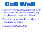 Structure: strong, stiff, nonliving layer outside of the cell membrane