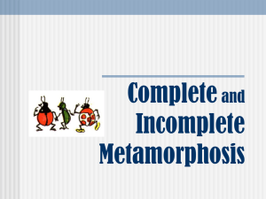 Metamorphosis powerpoint