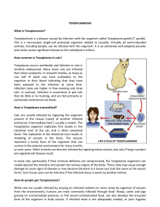 What is Toxoplasmosis?