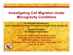 Investigating Cell Migration Under Microgravity Conditions