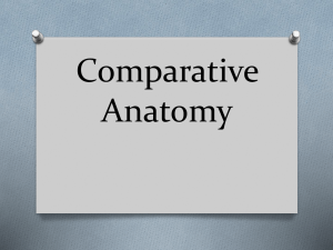 comparative anatomy ppt