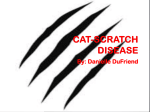 Cat-Scratch Disease - andoverhighanatomy