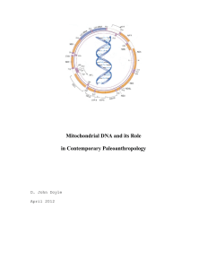 Mitochondrial DNA and its Role in Contemporary Paleoanthropology