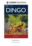 Purcell, B (2010). Dingo. CSIRO PUBLISHING, Melbourne. View