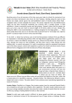 Article 123 Arundo donax Spanish Reed