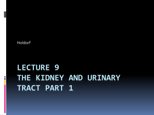 DMSM 105 Urinary Tract Part 1 - Echo ED: Diagnostic Medical