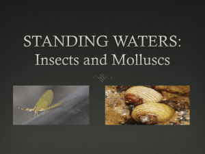 STANDING WATERS: Insects and Molluscs
