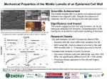 Mechanical Properties of the Middle Lamella of an Epidermal Cell Wall