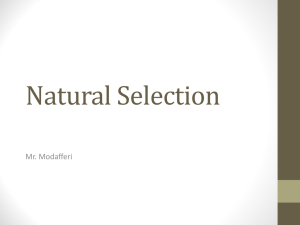 Natural Selection - Scarsdale Schools