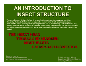 an introduction to insect structure - Biological Sciences