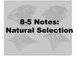 8-5 Notes: Natural Selection