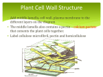 Plant cell wall structure File