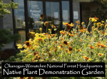native plants - Wenatchee - Washington Native Plant Society