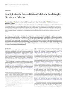 New Roles for the External Globus Pallidus in Basal Ganglia Circuits