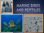 Marine Reptiles and Birds - Science with Ms. Reathaford!